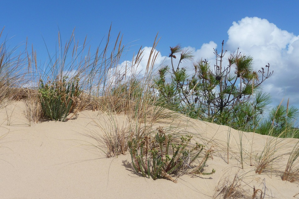 Dune, France, Oléron, Beach, Nature, Landscape, Holiday
