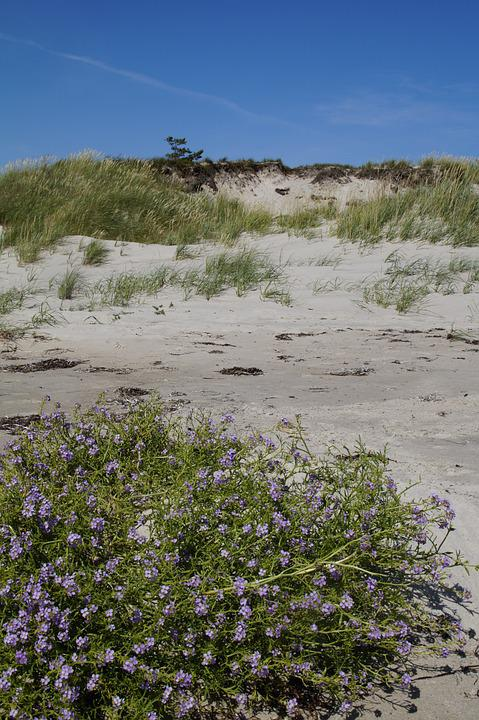 Dune, Dune Landscape, Grasses, Sea, Ocean, Baltic Sea