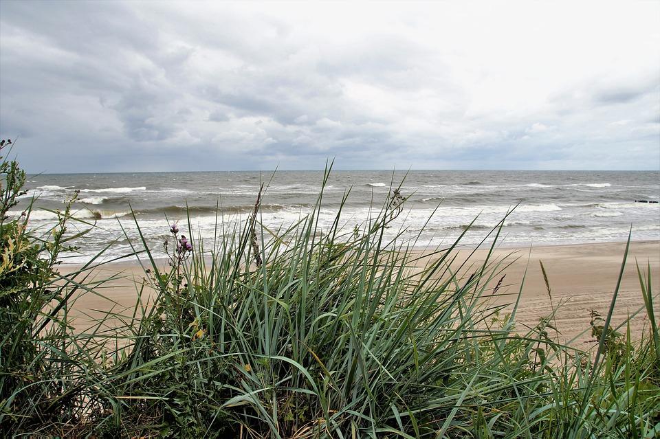 Sea, Coast, Dune, Sand, Grasses, Grass, Sharp