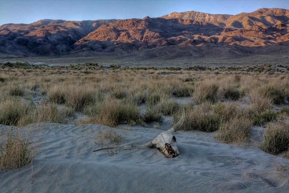 Dunes, Skull, Desert, Arid, Dead, Dry, Sand, Animal