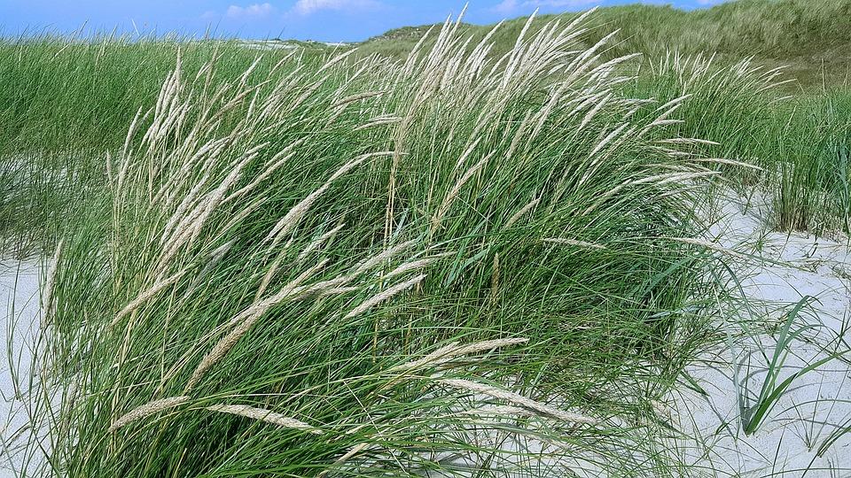 North Sea, Dunes, Grass