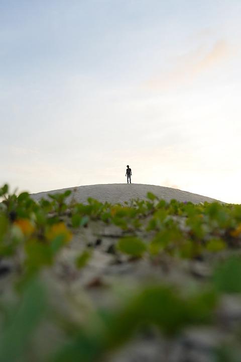 Beach, Man, Sand, Dunes, Silhouette, Sky, Plants