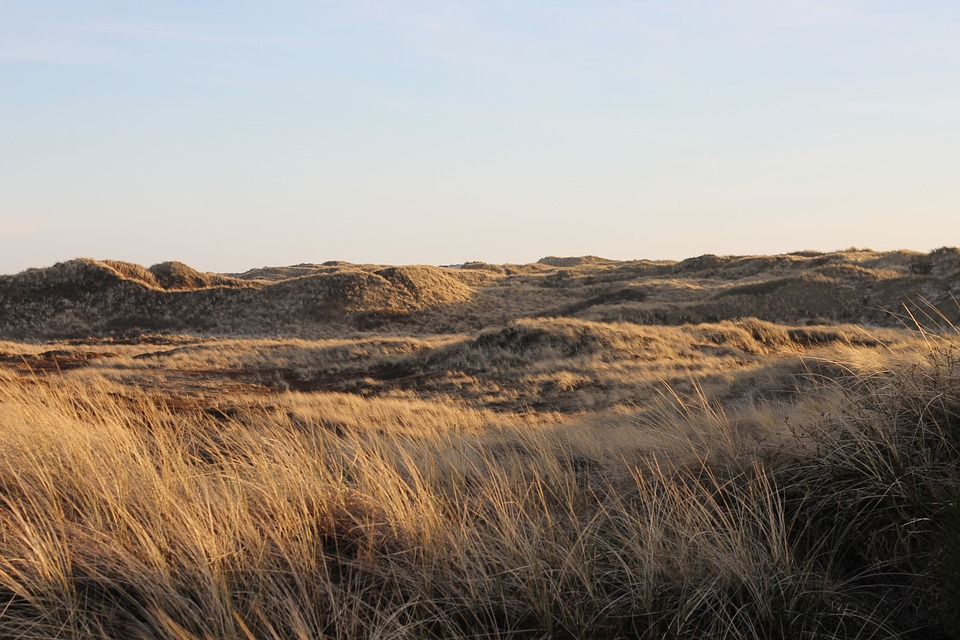 Denmark, Holiday, Dunes, North Sea, Nature, Sky, Grass