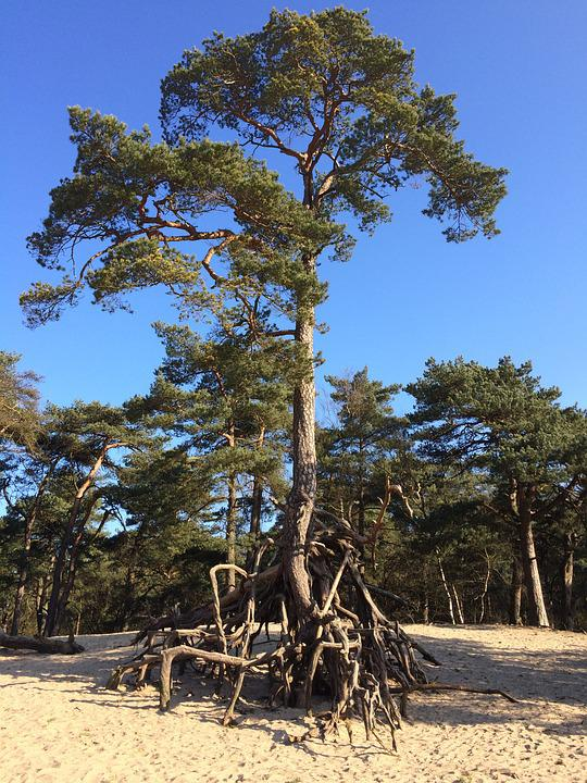 Tree, Sand, Trees, Landscape, Dunes, Plants
