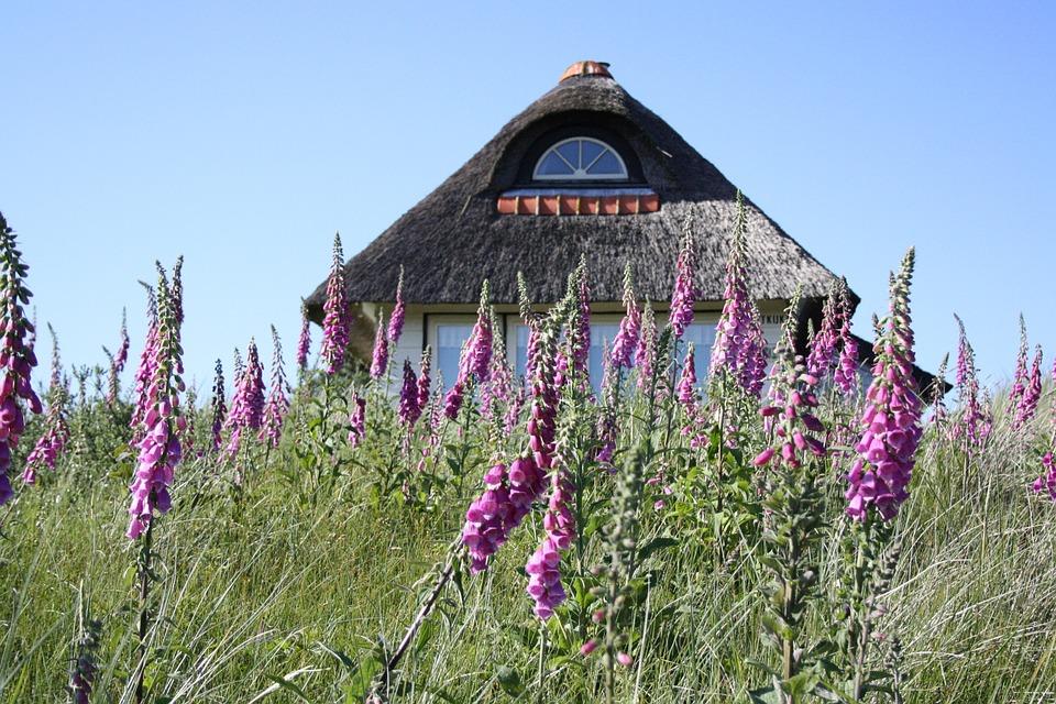 Summer Cottage, Foxglove, Dunes