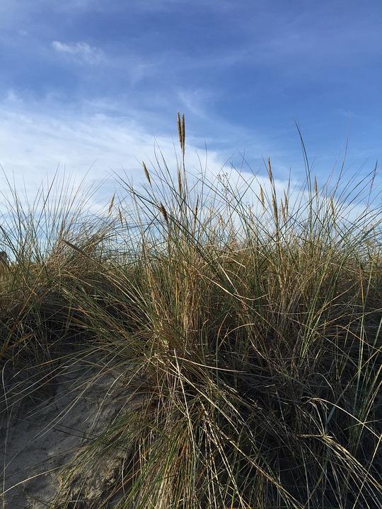 Sylt, Dune Grass, Dunes, Island, North Sea, Sea, Summer