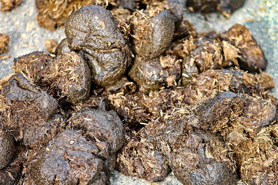 Horse Apples, Horse Manure, Nature, Dung, Horse Stable