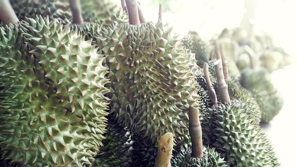 Durian Fruit, Durian, English's Fruit, Food, Fruit