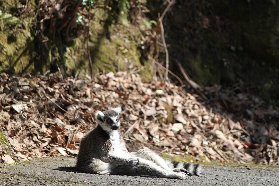 During A Break In, Zoo, Nagasaki Bio Park