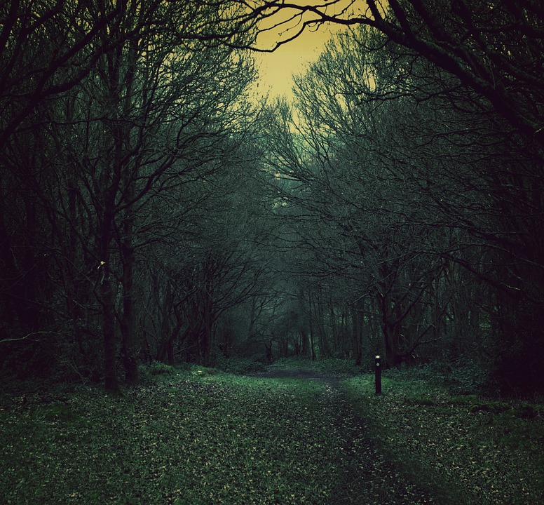 Forest At Dusk Wallpaper: Free Photo Dusk Forest Path Dark Nature Spooky Woods