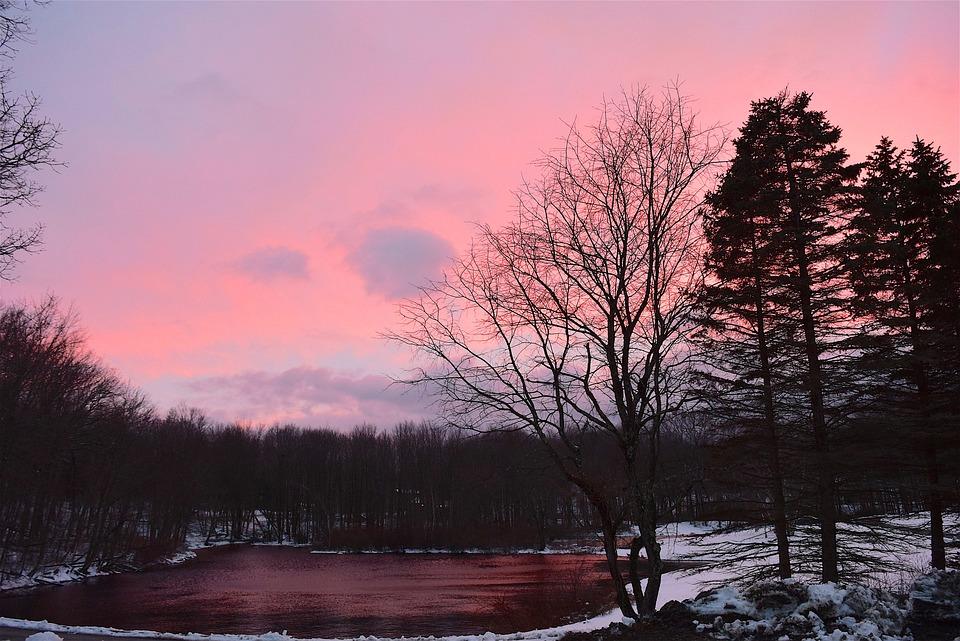 Sunset, Sky, Pink, Tree, Nature, Dusk, Outdoors
