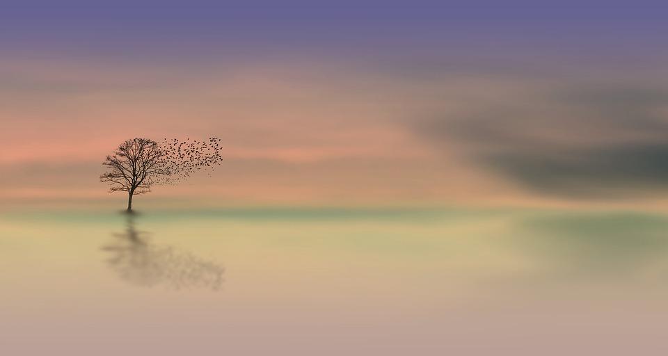 Dawn, Tree, Dusk, Birds, Abendstimmung, Romantic, Mood