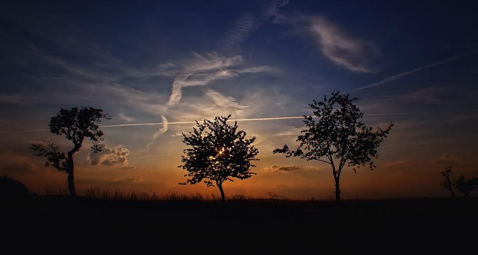 Sunset, Trees, Silhouettes, Dusk, Sky, Evening Sky