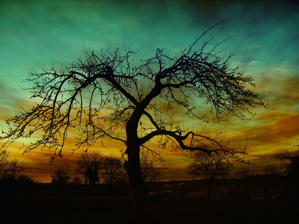 Tree, Nature, Dusk, Sunset, Kahl Tree, Silhouette
