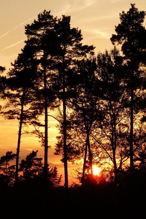 Trees, Forest, Sunset, Dusk, Silhouette, Woods, Foliage