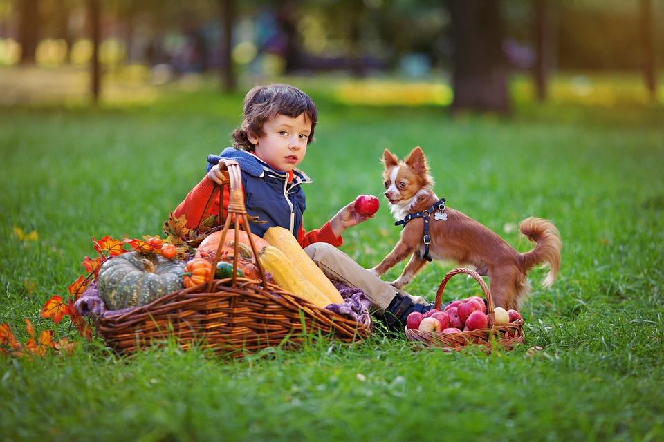 Boy, Dog, Pug, Small Dog, Each, Animal, Puppy, Pets