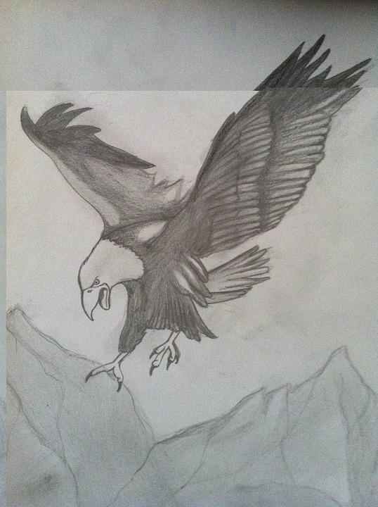 Eagle, Charcoal Drawing, Pencil Drawing, Drawing