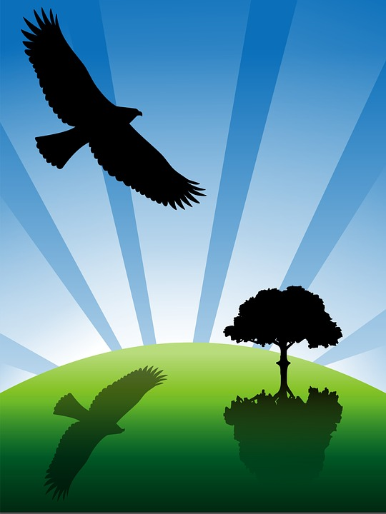 Bird, Day, Eagle, Earth, Feather, Fly, Grass, Ground