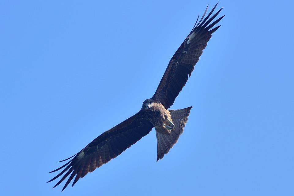 Eagle, The Eagles, Bird