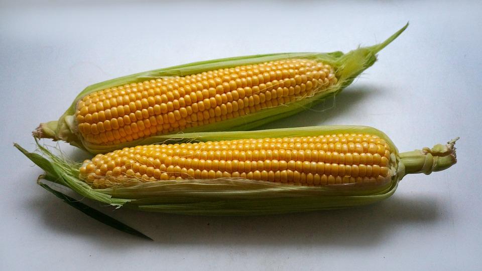 Ear Of Corn, Leaves, Light Background, Corn, Corn Cobs