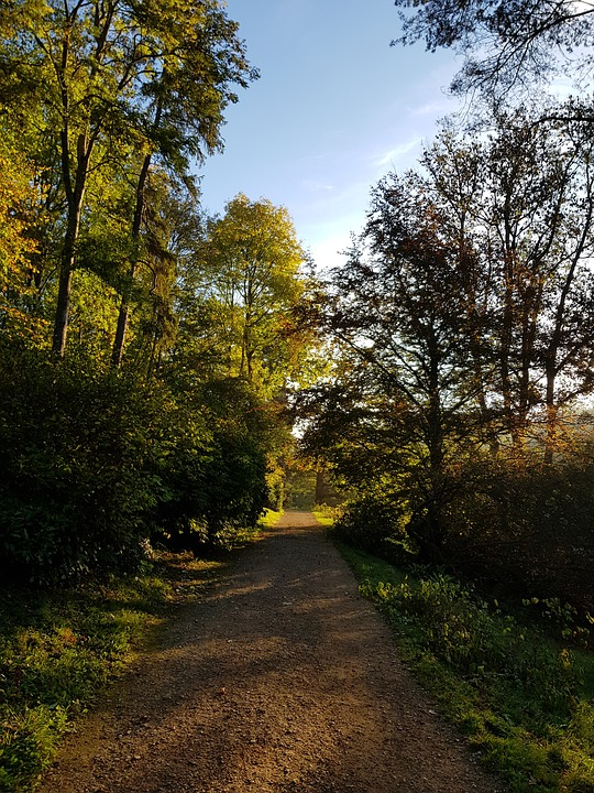 Path, Early Morning, Sun, Forest