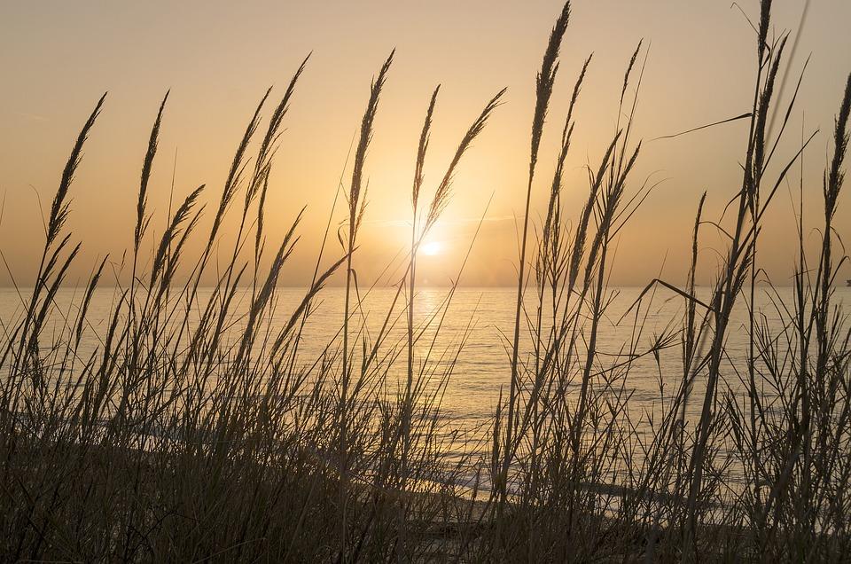 Life, Beauty, Scene, Beach, Nature, Ground, Earth