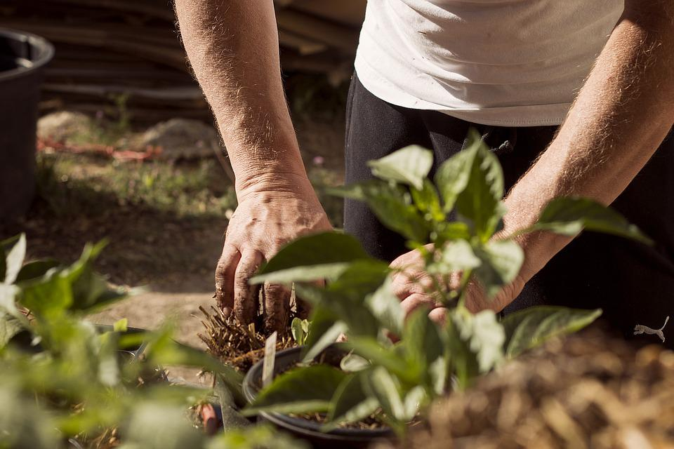 Garden, Working Hands, Dirt, Earthing, Mother Earth