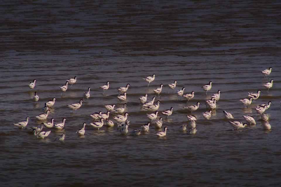 Watts, North Sea, East Frisia, Birds, Nature, Animals