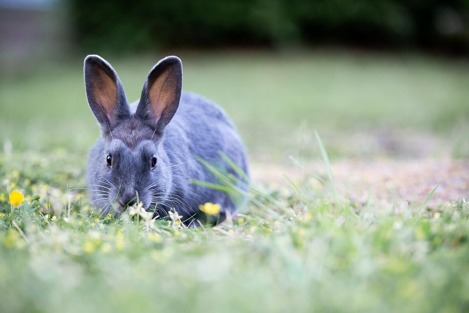Bunny, Rabbit, Grass, Easter, Cute, Furry, Brown, Wild