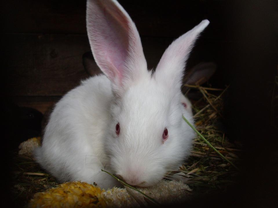 Rabbits, Rabbit, Animal, Easter, Ear, Long-eared, Bunny