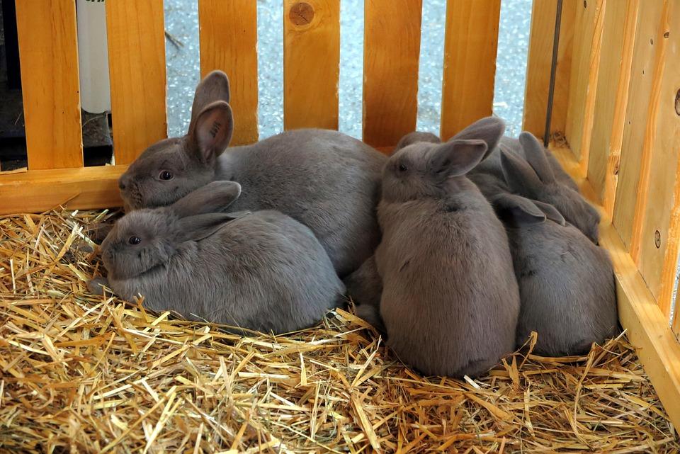 Rabbit, Easter Bunny, Animal, Long Eared, Nest, Cuddly