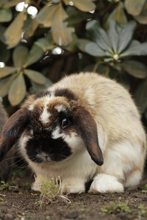 Bunny, Nature, Rabbit, Hare, Cute, Easter, Wildlife
