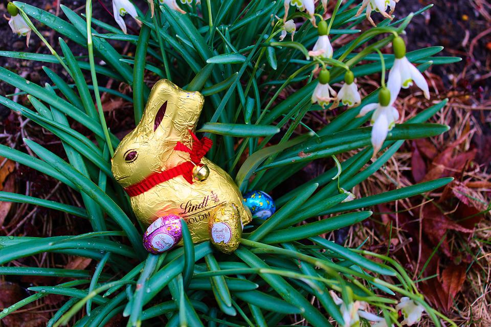 Nature, Flower, Grass, Easter