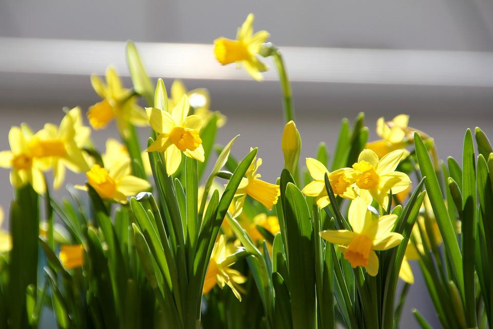 Easter, Flowers, Spring, Yellow, Flower Box, Cowslip