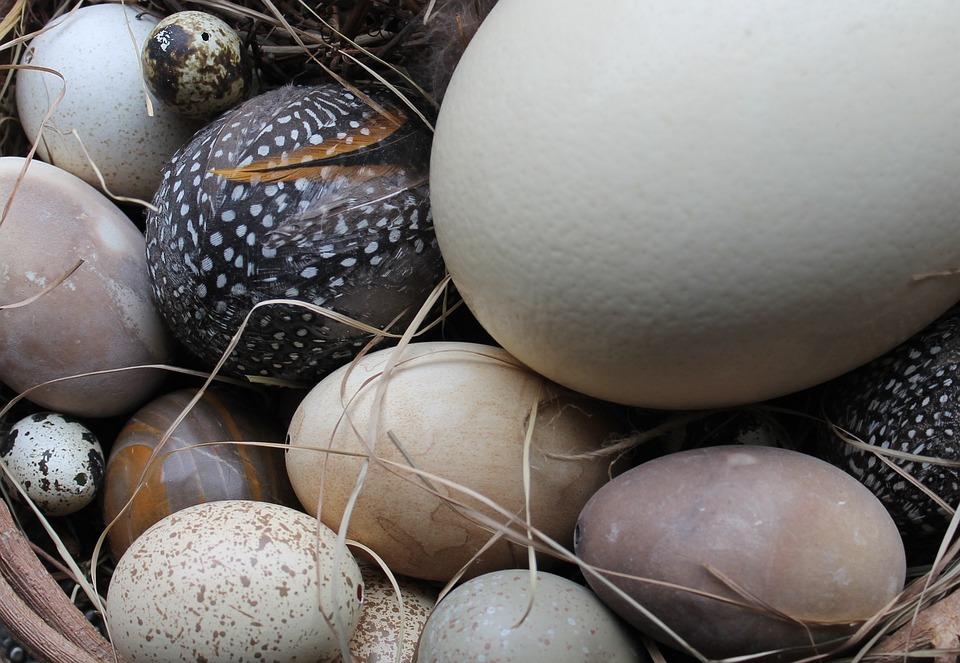 Easter Eggs, Easter Nest, Nature, Decoration, Egg