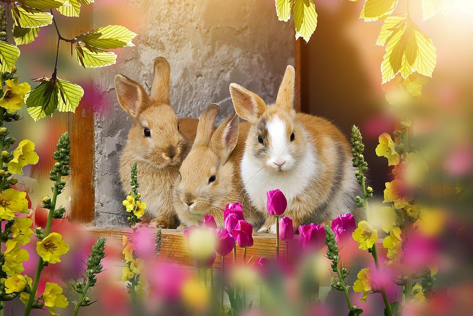 Rabbit, Out, Easter, Easter Time, Sweet, Small Cute