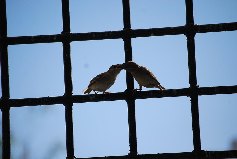 Birds, Eat, Couple