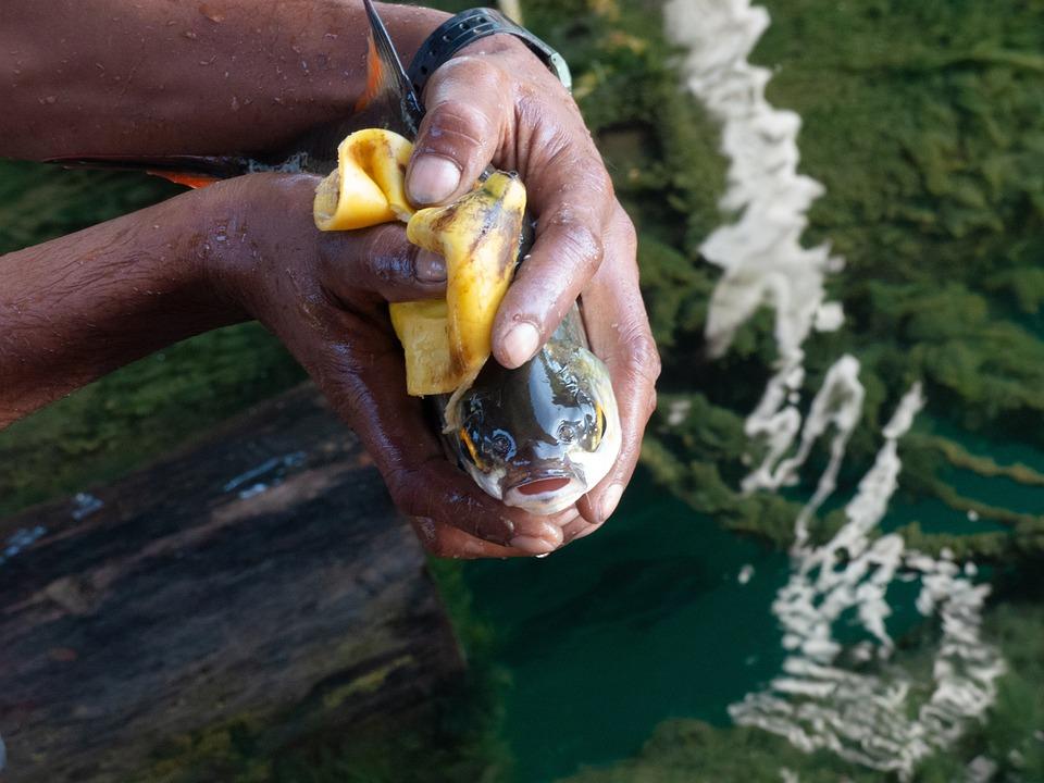 Fish, Fishing, Fresh, Fisherman, Banana Peel, Eat