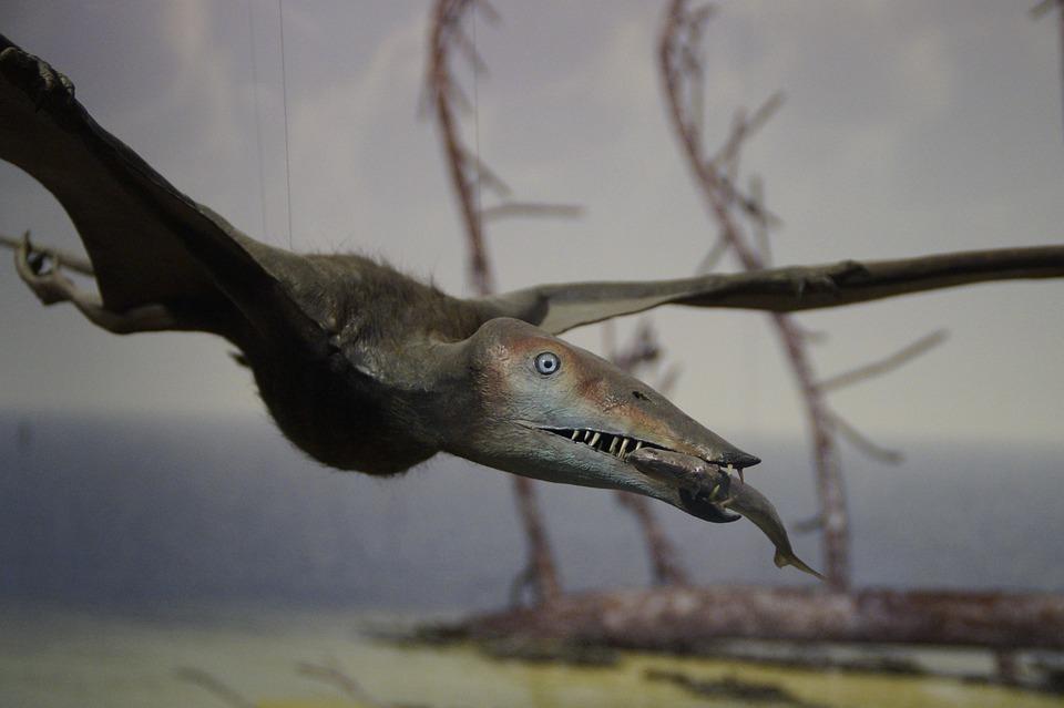 Pterosaur, Fishing, Prey, Eat, Prehistoric Times