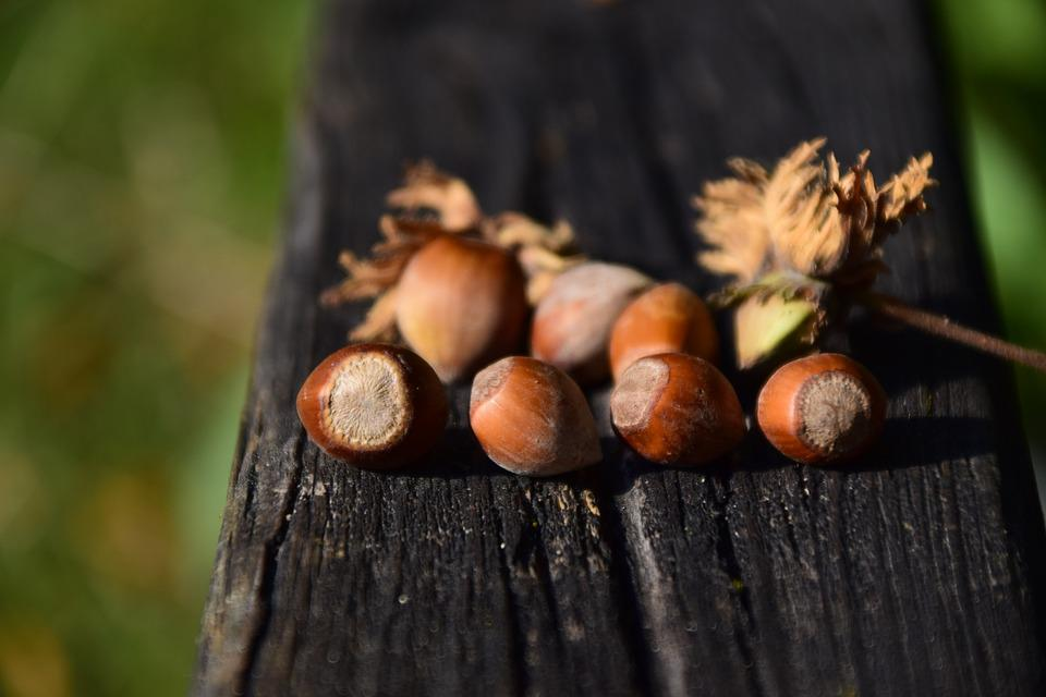 Nuts, Hazelnuts, Nut, Food, Brown, Tasty, Shells, Eat