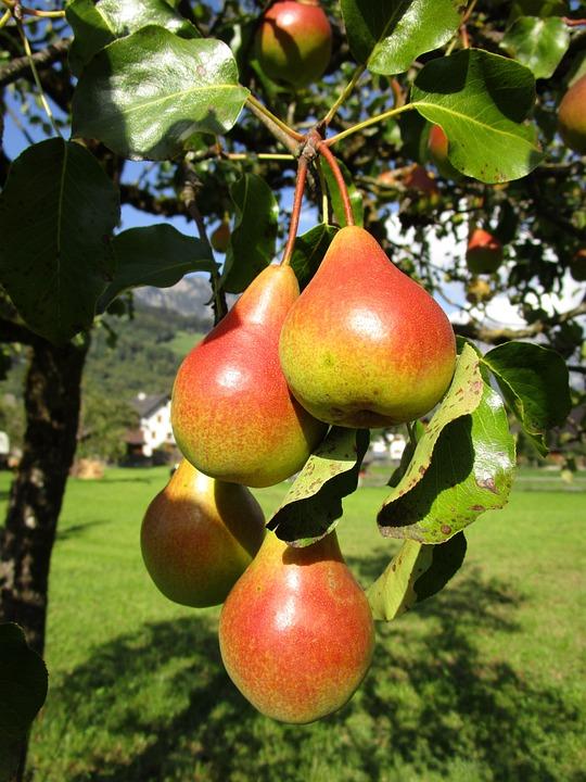 Pear, Fruit, Juicy, Tasty, Food, Eat, Healthy, Vitamins