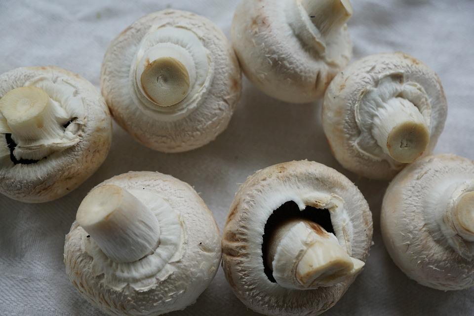 Mushrooms, White Mushroom, Eat, Healthy, White, Frisch