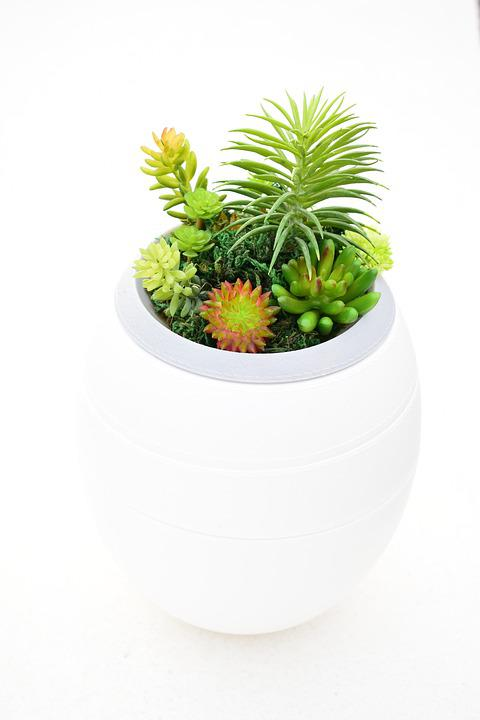 Funeral Plants For The Home on plants to send for sympathy, plants for funeral service, plants for cemetery, plants given at funerals, plants for church, plants sent to funerals, plants for a funeral,