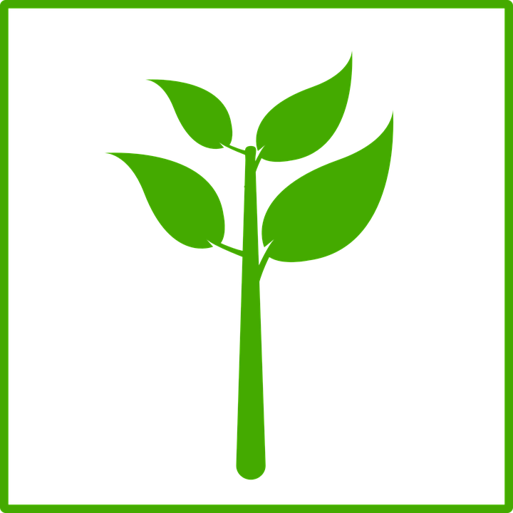 Sign, Ecology, Green, Plant, Leaves
