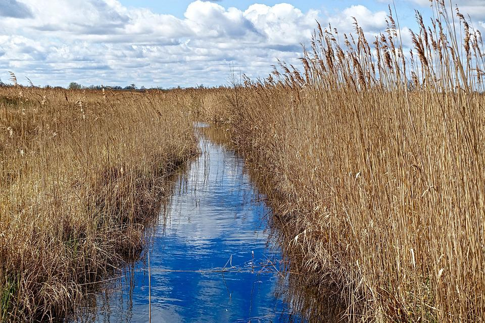 Stream, Waterway, Grasses, Environmental, Ecology