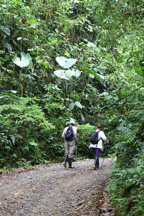 Hiking, Rainforest, Ecuador, Latin America, Idyll