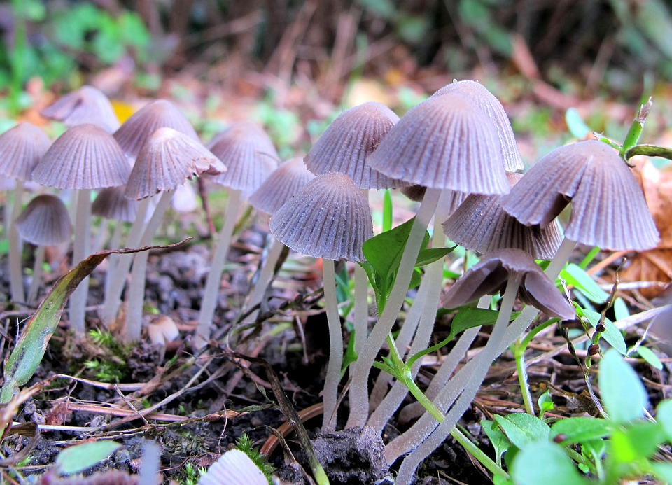 Mushrooms, Edge Of The Woods, Nature
