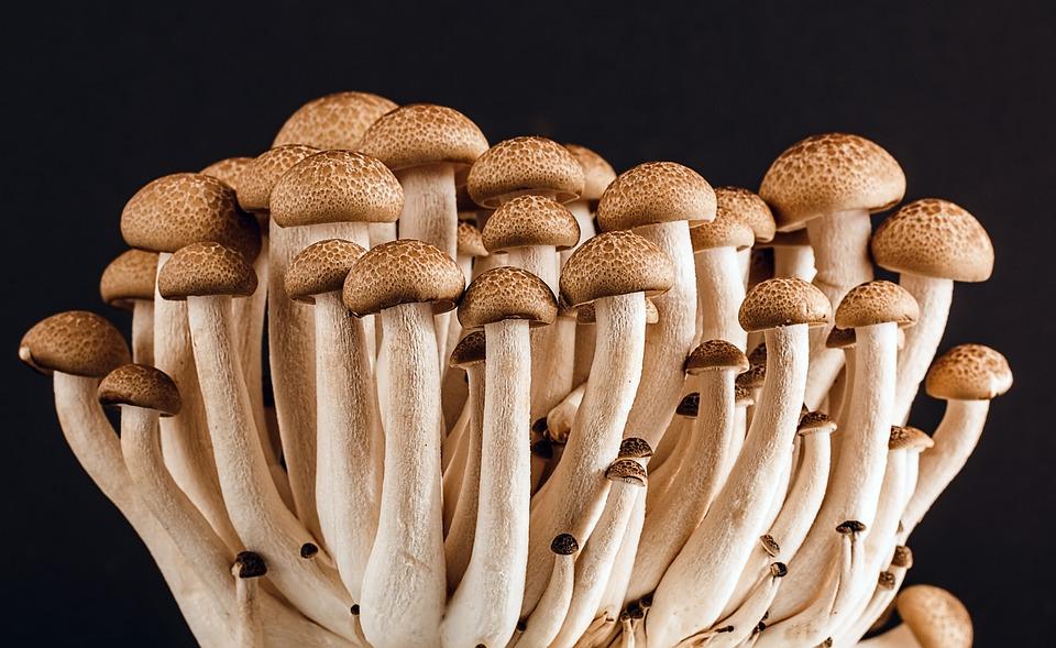 Mushrooms, Fungi, Edible, Edible Mushrooms, Sponge
