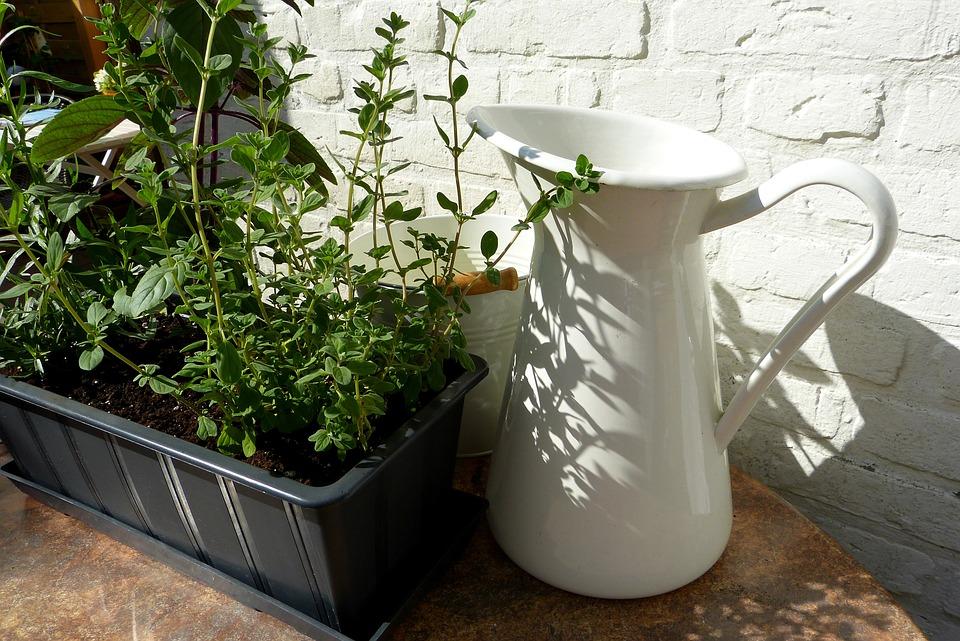 Herbs, Plant, Pot, Shadow, Sun, Garden, Edible, Nature