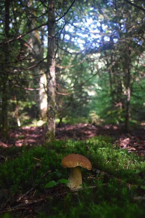 Mushroom, Moss, Food, Nature, Green, Forest, Edible